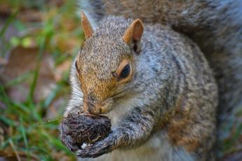 Les écureuils ne sont pas peureux et se laissent approcher facilement