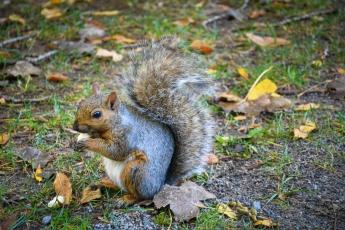 Un écureuil mange des restes de nourriture