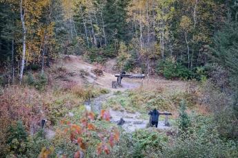 Les ours viennent se nourrir dans la clairière