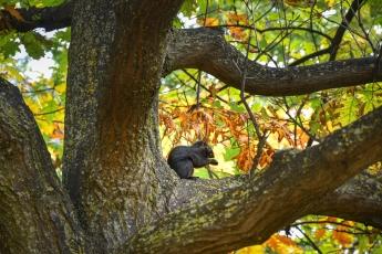 Un petit écureuil noir