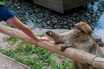 Les singes ne sont pas farouches