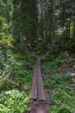 Le sentier traverse la forêt