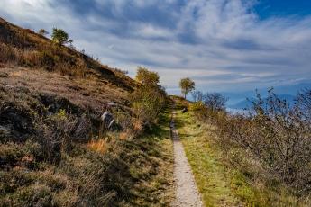 Un joli petit chemin dans la végétation