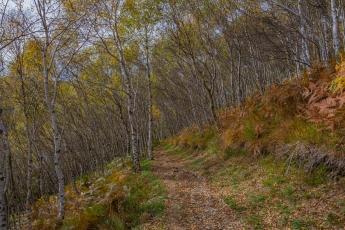 Le sentier serpente dans la forêt