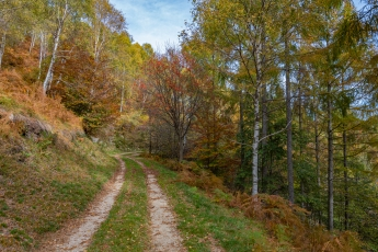 La forêt aux couleurs de l'automne
