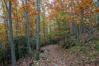 Au cœur de la forêt