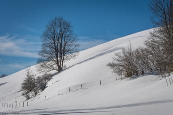 Promenade hivernale autour du lac Brenet